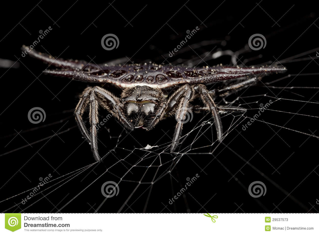 Spiny Orb Weaver clipart #4, Download drawings