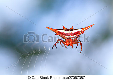 Spiny Orb Weaver clipart #19, Download drawings