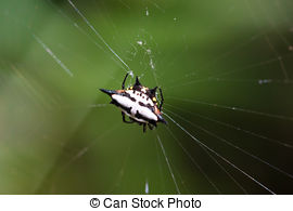 Spiny Orb Weaver clipart #20, Download drawings