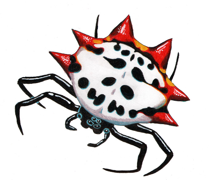 Spiny Orb Weaver clipart #15, Download drawings