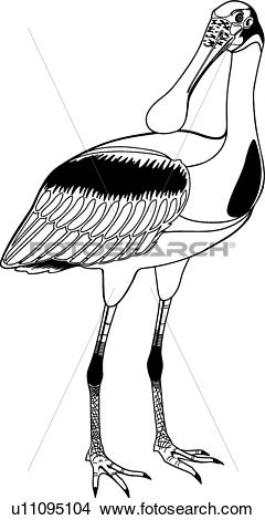 Spoonbill clipart #9, Download drawings