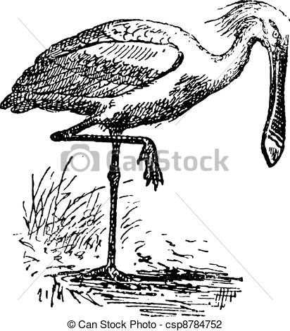 Spoonbill clipart #2, Download drawings