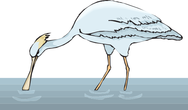 Spoonbill clipart #7, Download drawings