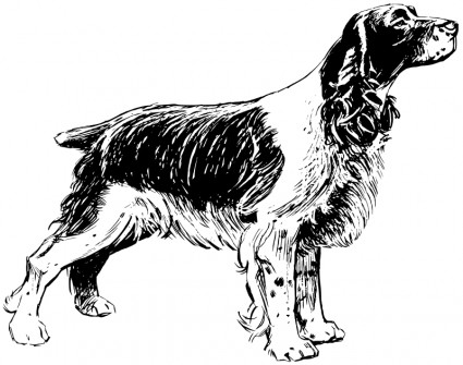 Springer Spaniel clipart #7, Download drawings