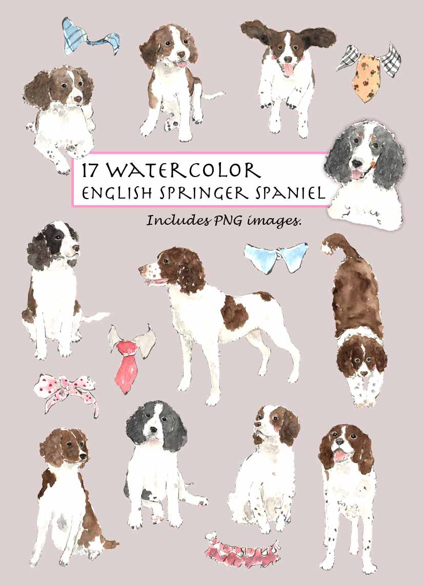 Springer Spaniel clipart #10, Download drawings