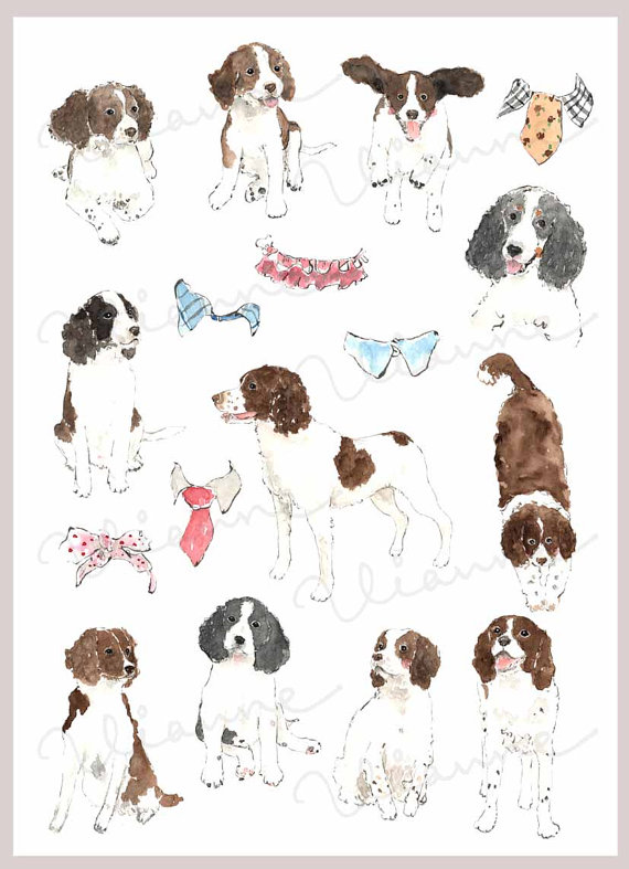 Springer Spaniel clipart #5, Download drawings