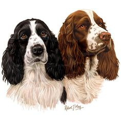 Springer Spaniel clipart #6, Download drawings