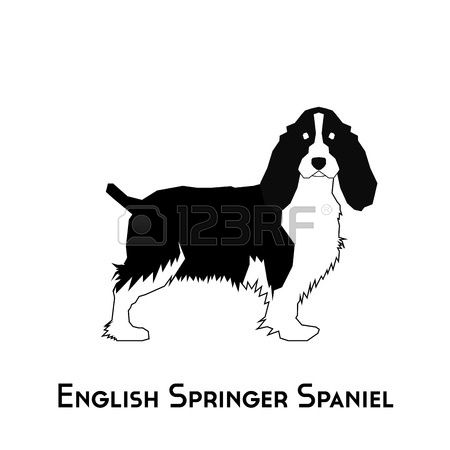 Springer Spaniel clipart #11, Download drawings