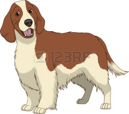 Springer Spaniel clipart #14, Download drawings