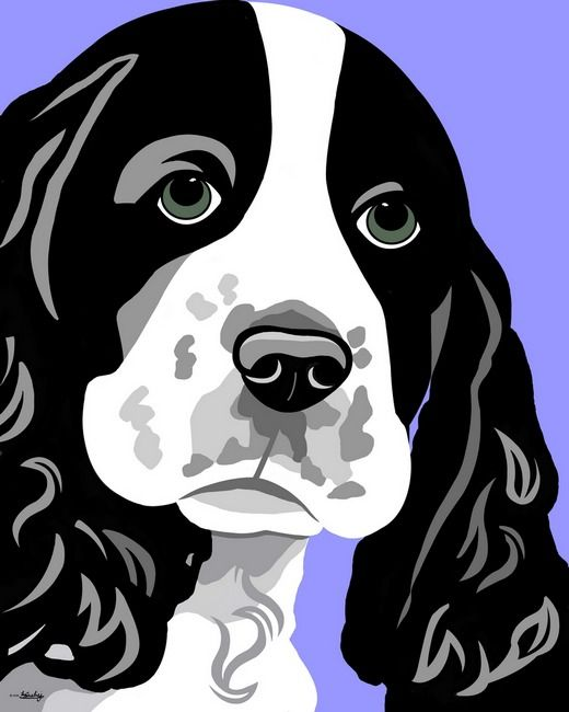 Springer Spaniel clipart #8, Download drawings