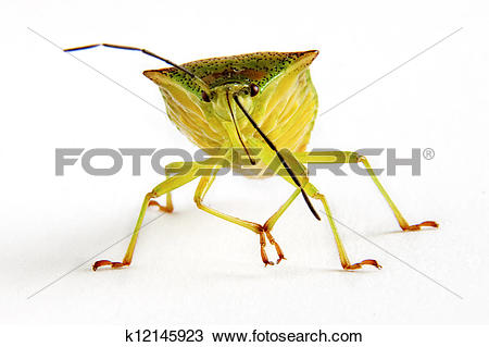 Squash Bug clipart #13, Download drawings