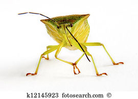Squash Bug clipart #20, Download drawings
