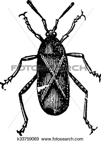 Squash Bug clipart #16, Download drawings