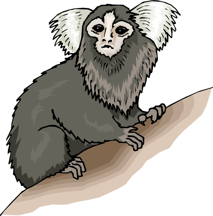 Squirrel Monkey clipart #1, Download drawings