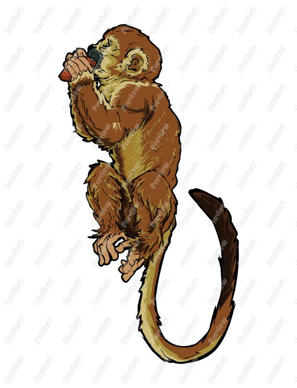 Squirrel Monkey clipart #15, Download drawings