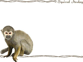 Squirrel Monkey clipart #9, Download drawings