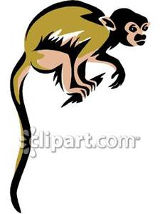 Squirrel Monkey clipart #17, Download drawings