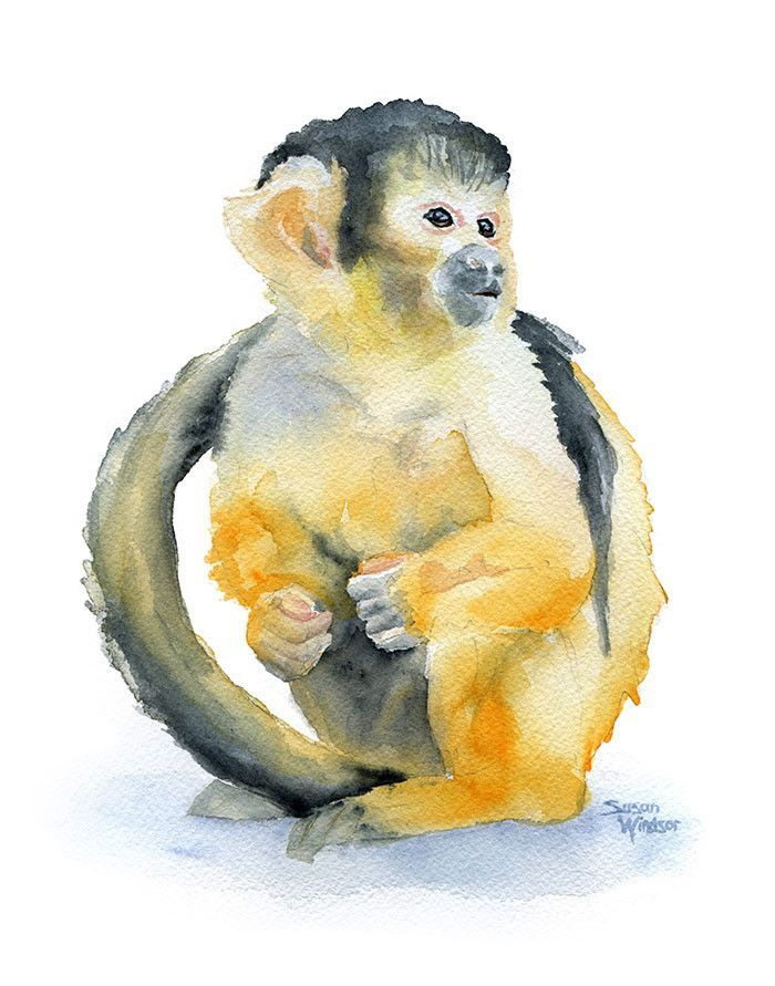 Squirrel Monkey svg #9, Download drawings