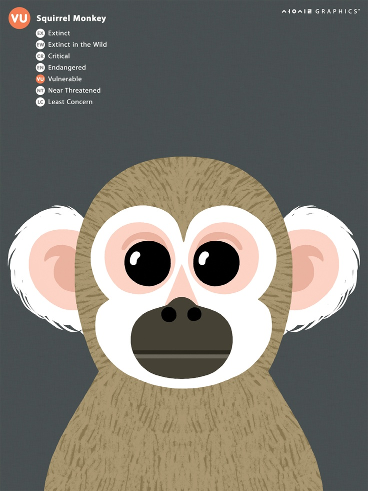 Squirrel Monkey svg #4, Download drawings