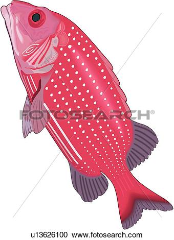 Squirrelfish clipart #19, Download drawings