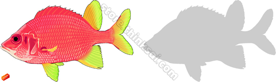 Squirrelfish clipart #9, Download drawings