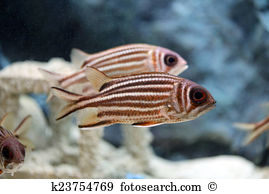 Squirrelfish clipart #13, Download drawings