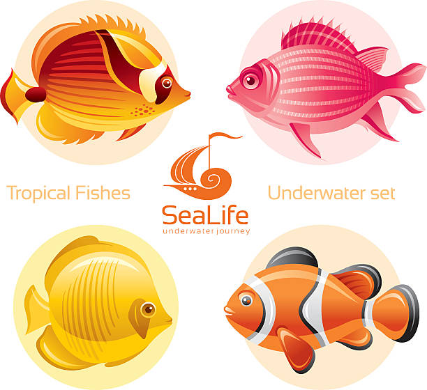 Squirrelfish clipart #7, Download drawings