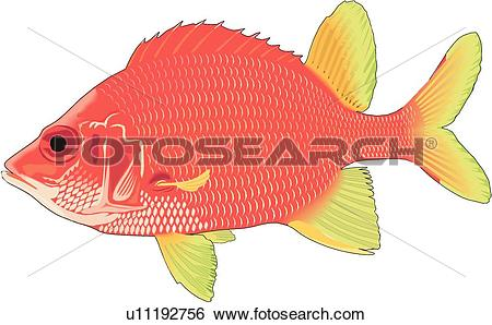 Squirrelfish clipart #18, Download drawings
