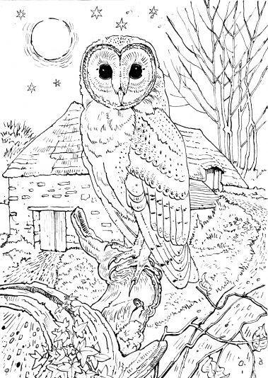 Srigala Sadis coloring #13, Download drawings