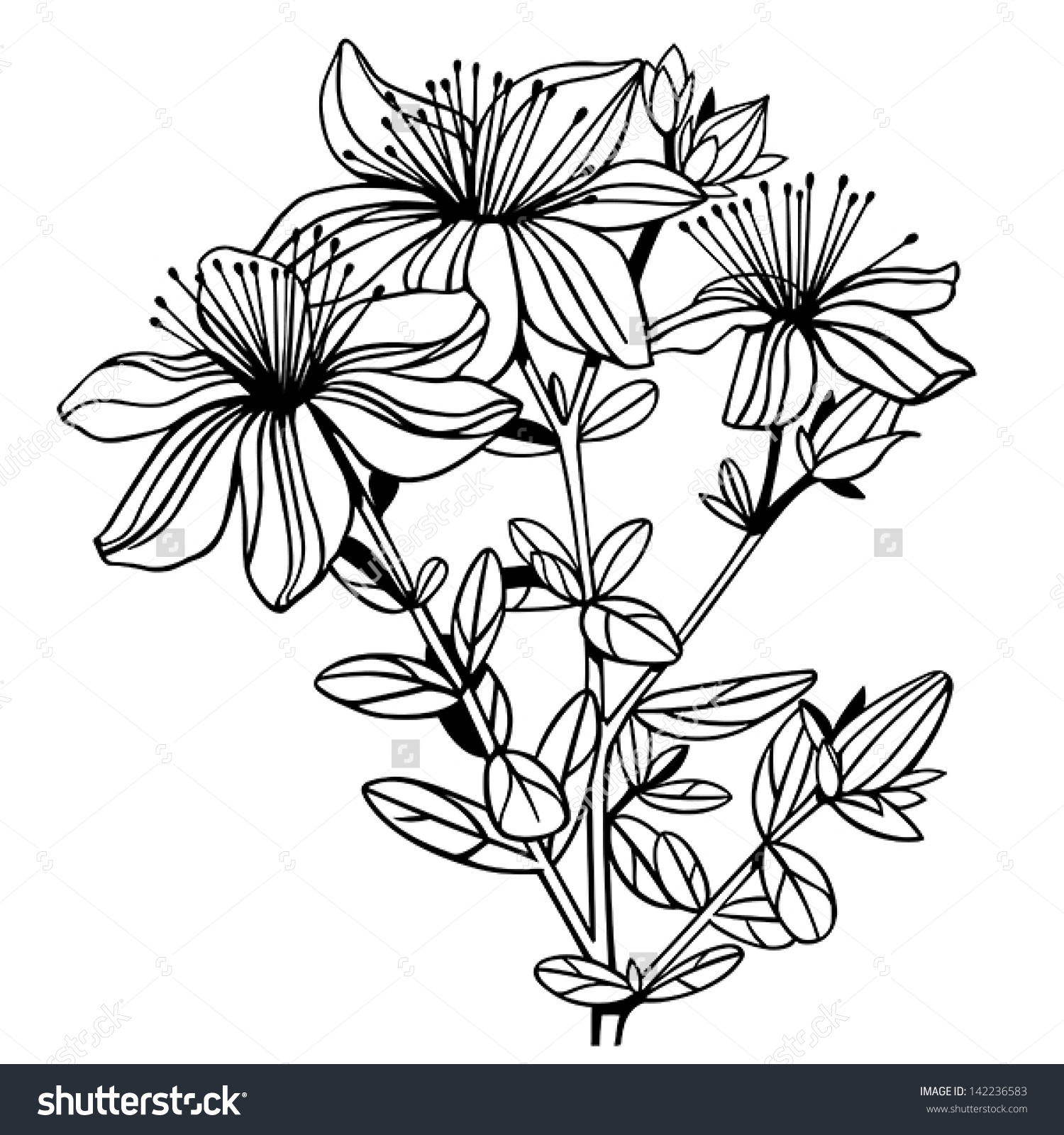 St John's Wort clipart #19, Download drawings
