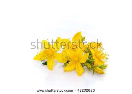 St John's Wort clipart #6, Download drawings