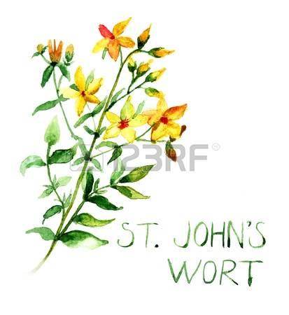 St John's Wort clipart #7, Download drawings