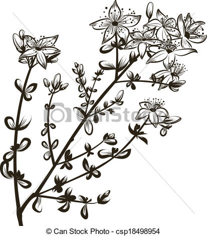 St John's Wort clipart #4, Download drawings