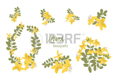 St John's Wort clipart #2, Download drawings