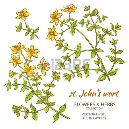 St John's Wort clipart #8, Download drawings