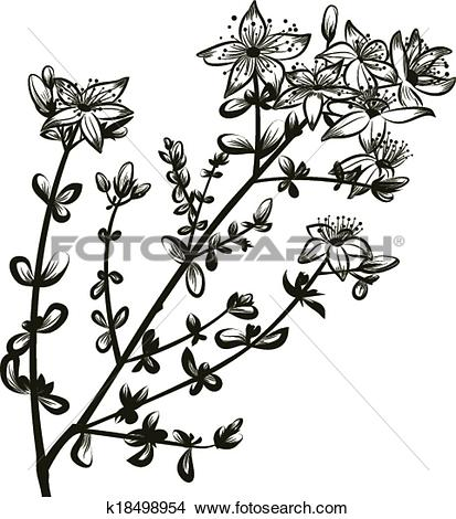 St John's Wort clipart #13, Download drawings