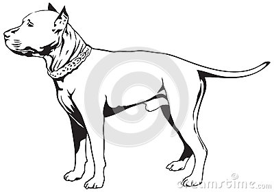 Staffordshire Bull Terrier clipart #3, Download drawings