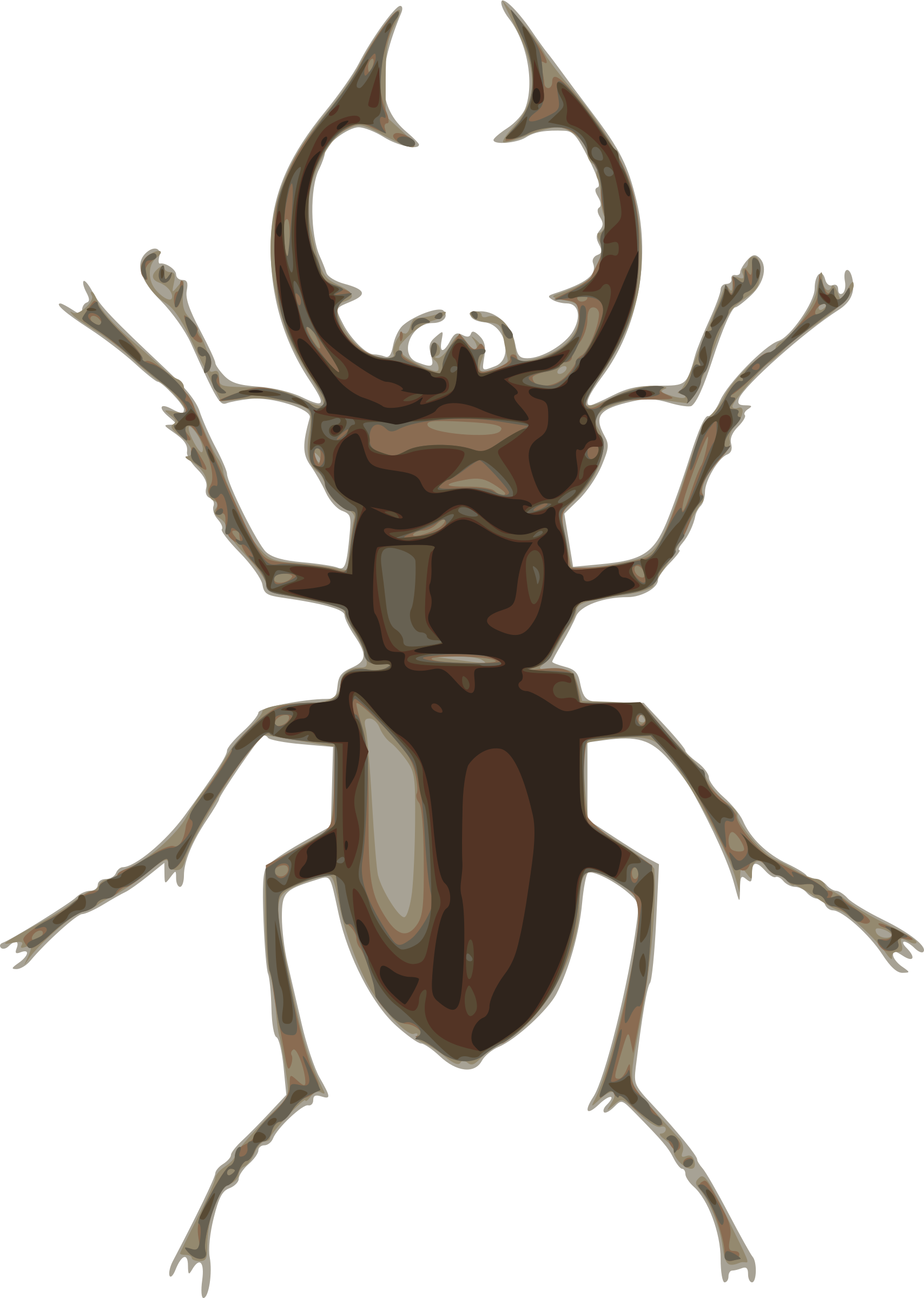 Stag Beetle clipart #6, Download drawings