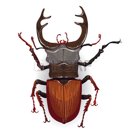 Stag Beetle clipart #12, Download drawings