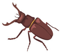 Stag Beetle clipart #14, Download drawings