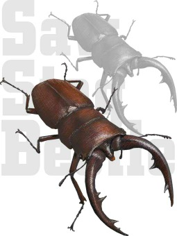 Stag Beetle clipart #1, Download drawings