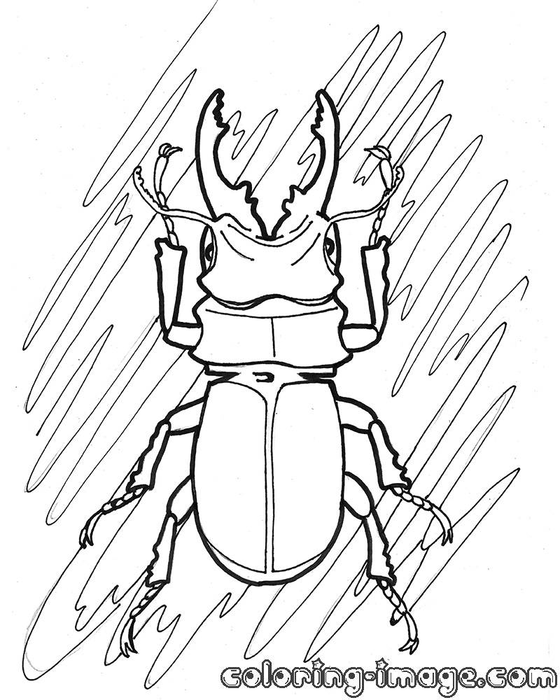 Stag Beetle coloring, Download Stag Beetle coloring for ...  |Stag Beetle Coloring Page