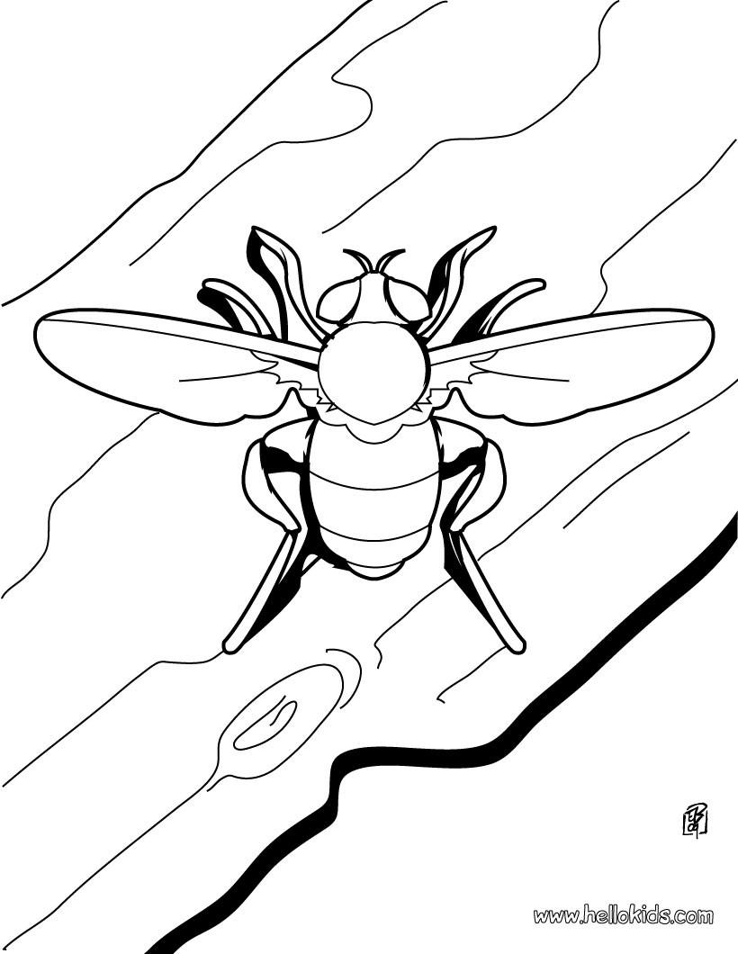 Stag Beetles coloring page | Free Printable Coloring Pages  |Stag Beetle Coloring Page