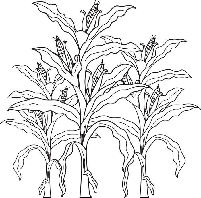 Cornfield coloring #9, Download drawings