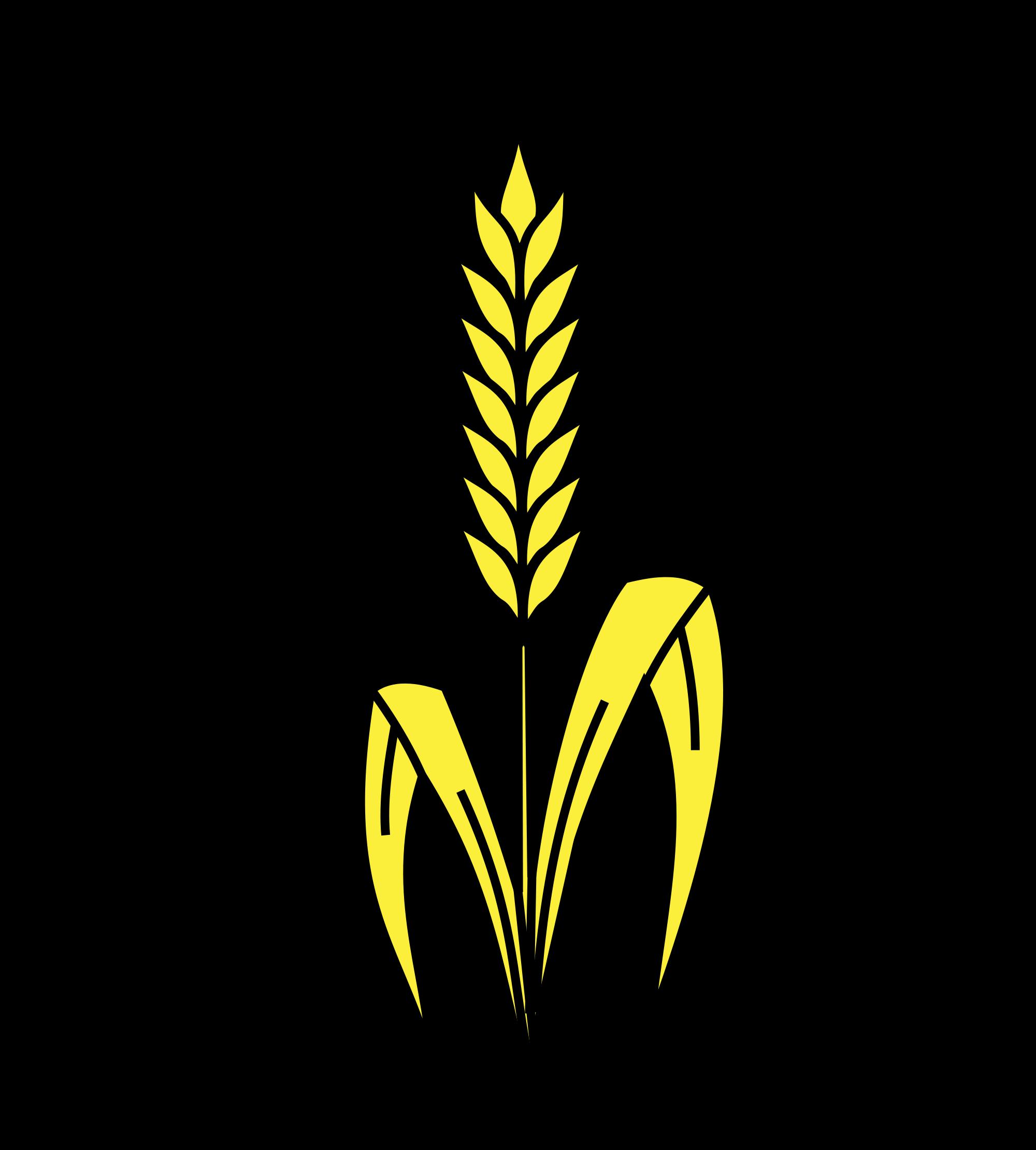 распечатать картинки пшеницы посадки ухода