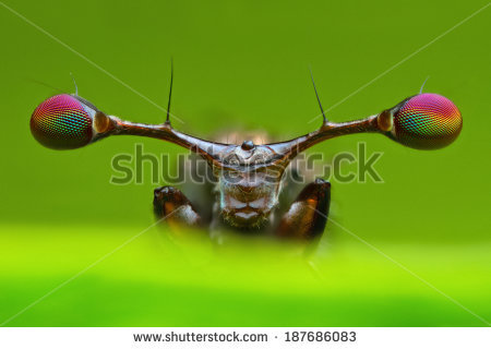 Stalk-eyed Fly clipart #6, Download drawings