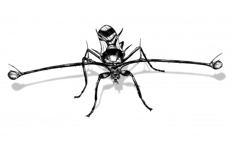 Stalk-eyed Fly clipart #5, Download drawings