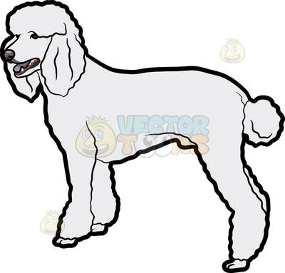 Standard Poodle clipart #12, Download drawings