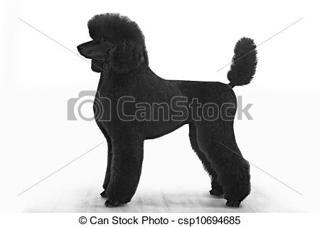 Standard Poodle clipart #7, Download drawings