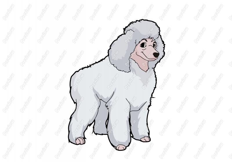 Standard Poodle clipart #19, Download drawings